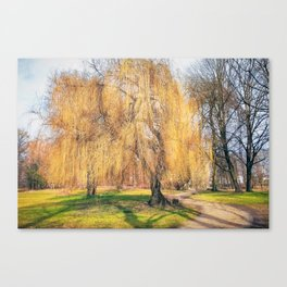 Weeping willow tree in a park Canvas Print