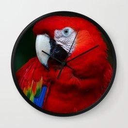Scarlet Macaw Bird Wall Clock