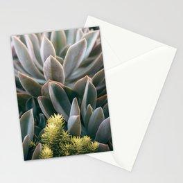 Graptoveria Study #3 Stationery Cards