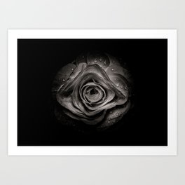 Backyard Flowers In Black And White 74 Art Print