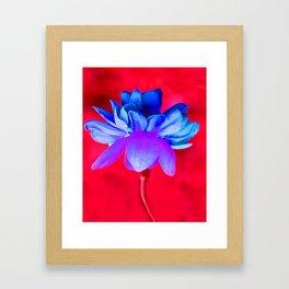 Blue Flower Framed Art Print