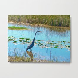 Blue Heron in the Glades Metal Print