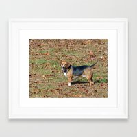 beagle Framed Art Prints featuring Beagle by Frankie Cat