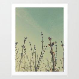 lilac buds Art Print