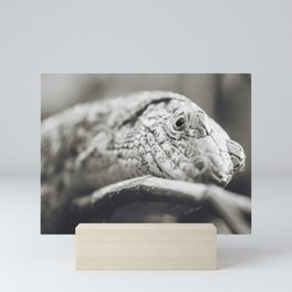Southeastern Girdled Lizard Mini Art Print