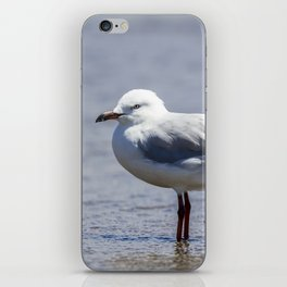 Silver Gull standing in Shallow Water iPhone Skin