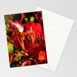 Flamboyan Stationery Cards