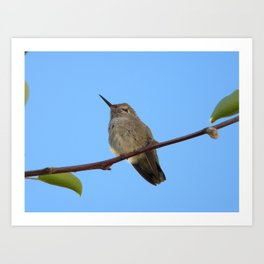 Hummingbird friend Art Print