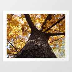 GREATOAK Art Print