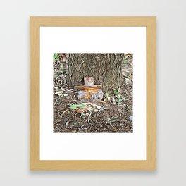 Spring Tease Framed Art Print