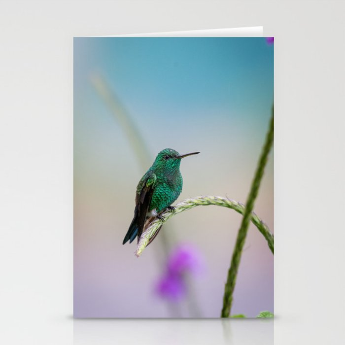 Costa Rican Hummingbird Stationery Cards