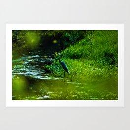 Heron Art Print