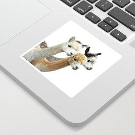 Alpaca Trio Sticker