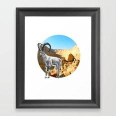Nubian Ibex Framed Art Print