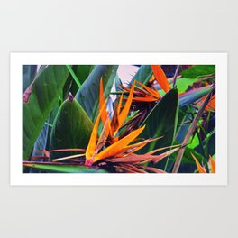 Tropical Flowers Art Print