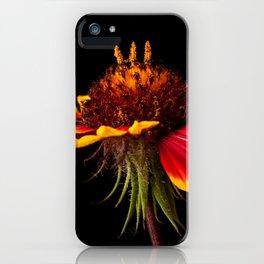Indian Blanket Flower iPhone Case