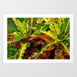 Tropical Croton Plant Art Print