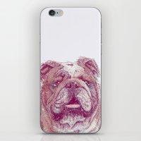 bulldog iPhone & iPod Skins featuring Bulldog by Ahmad Mujib