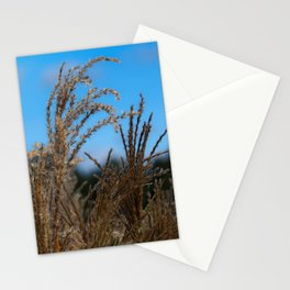Chinese Silver Grass and Blue Sky Stationery Cards