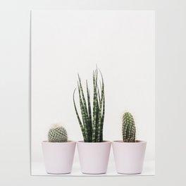 Trendy cactus plants Poster