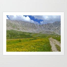 Mayflower Gulch brimming with wildflowers Art Print