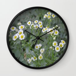 daisy shot Wall Clock