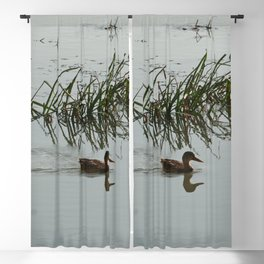 Young Duck swimming in the river Blackout Curtain