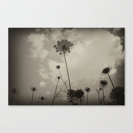 """Queen Anne's Lace """"black and white"""" Canvas Print"""