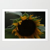 Sunflowers For VanGogh  Art Print