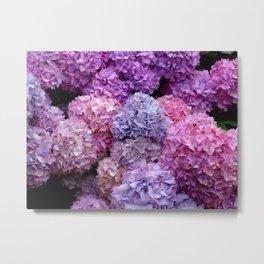 Spring Hydrangeas 2 Metal Print