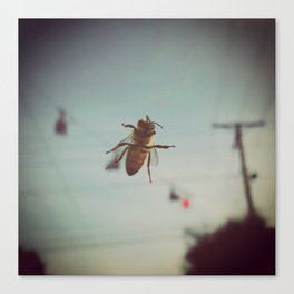 Bee on Windshield Canvas Print