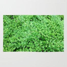 Textures in Green Rug