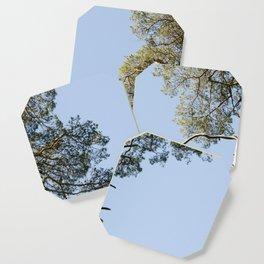 Coniferous Tree Series 3 of 3 Coaster