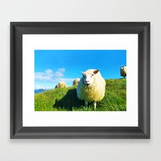 Sheeps in Iceland with Green Field Framed Art Print