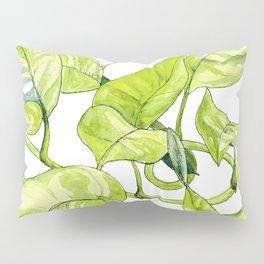 Devils Ivy Illustration Pillow Sham