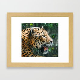 Jaguar in May Framed Art Print