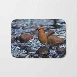 Cedar Waxwing on Rock Bath Mat