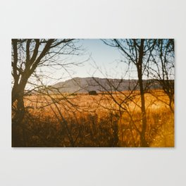 Buffalo Tribe Canvas Print
