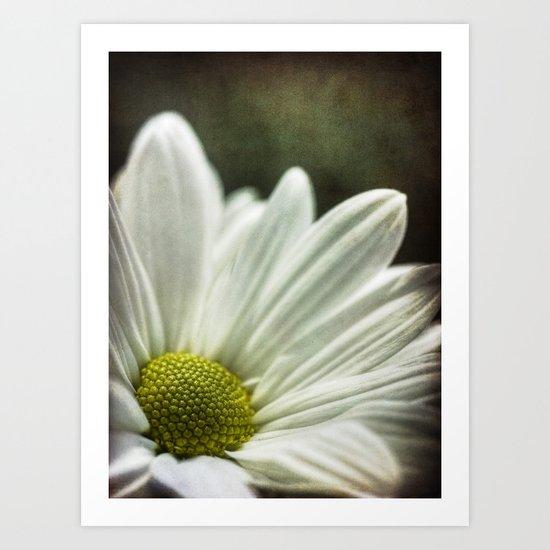 daisy. Art Print