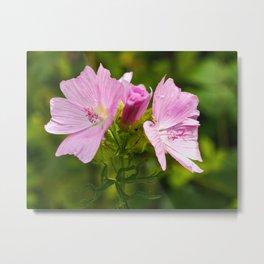 Prairie Mallow (Sidalcea) Flowers Metal Print