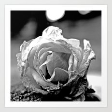 Wilting rose Art Print