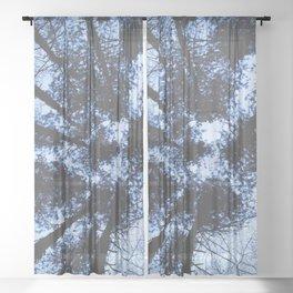 Looking Up At Trees Sheer Curtain