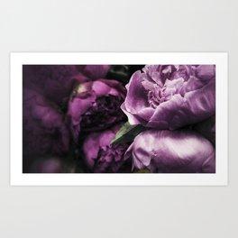 Peonies for Brenna Art Print