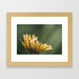 It touches the colors Framed Art Print