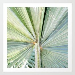 Fanned Palms Art Print