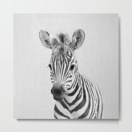Baby Zebra - Black & White Metal Print