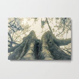 Up in the Trees Metal Print