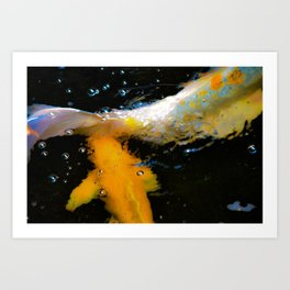 The Color of Coy Art Print