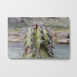 Kadushi cactus Metal Print
