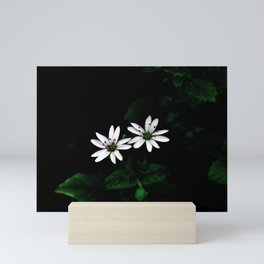 Botanical Still Life Little White Flowers Mini Art Print
